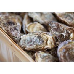 13 huîtres creuses cal 4 - secteur Vannes/Auray