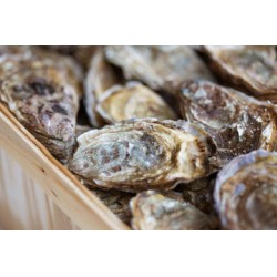 13 huîtres creuses cal2 - secteur Vannes/Auray