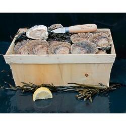 100 huîtres plates Belon calibre 2 - Expédition en France